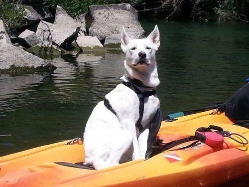 犬の新しい飼い主が写真を送ってきた02