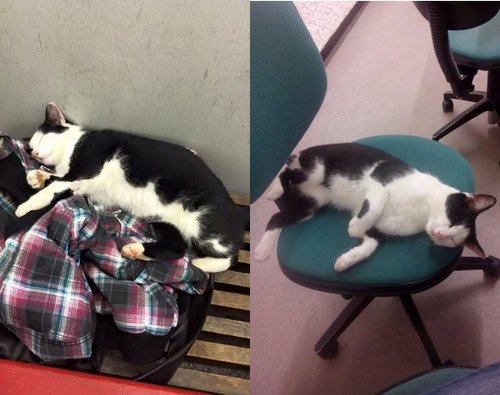 ドイツの大学で暮らす猫09