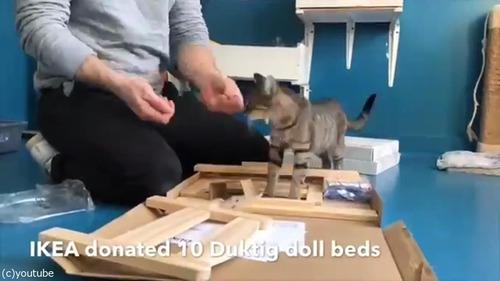 猫にピッタリのベッドを寄付した結果01