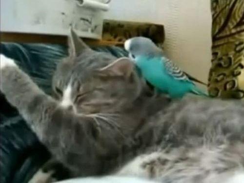 小鳥に翻弄される猫たち01