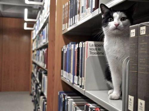 ドイツの大学で暮らす猫00