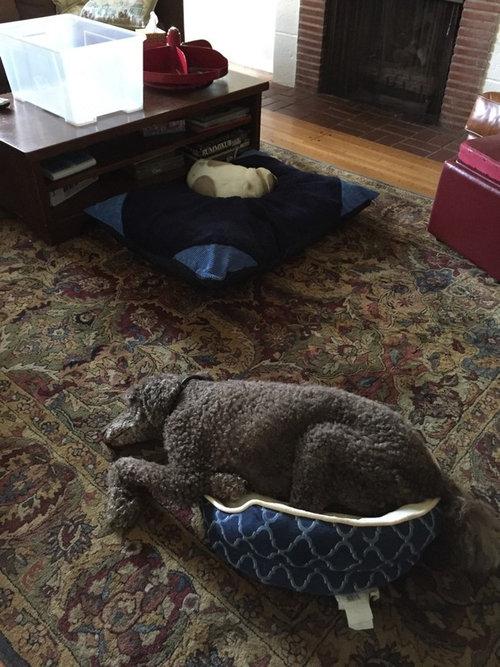 猫にベッドを奪われた犬たち18