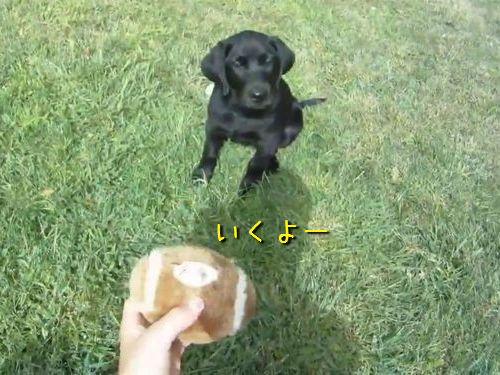 犬がボールをキャッチできるようになるまで00