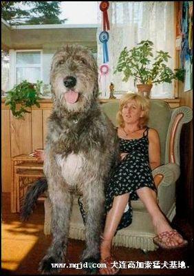 巨大な犬03