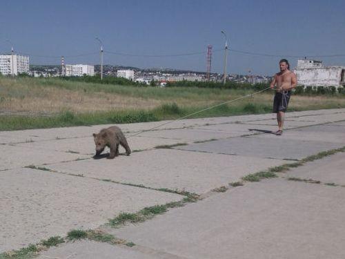 ロシアのクマ03