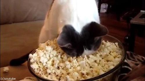 作りたてのポップコーンと猫08
