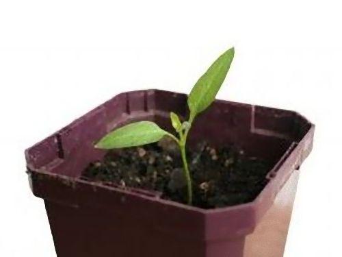 00生命力のる植物たち