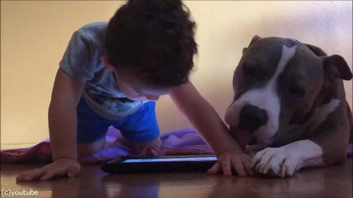 弟と犬とiPad07