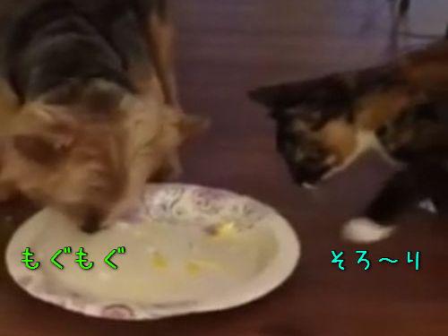 犬と猫が同じ皿でごはん00