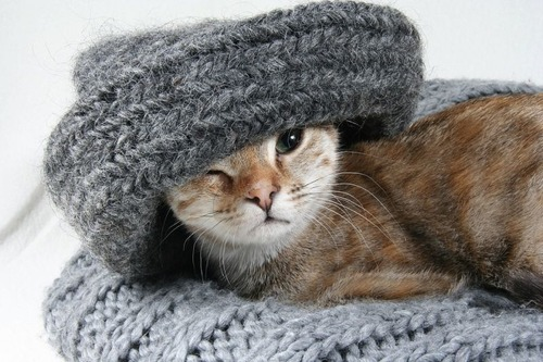 猫の屋内飼育02