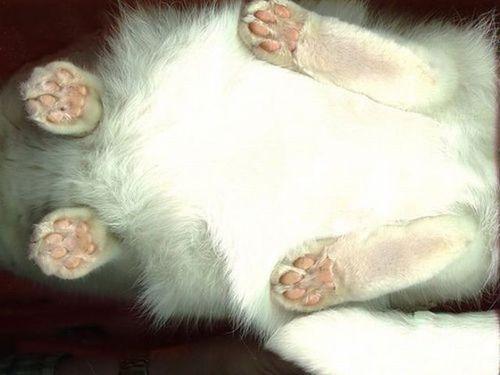 猫スキャン07