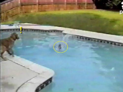 溺れる子犬を助ける母犬