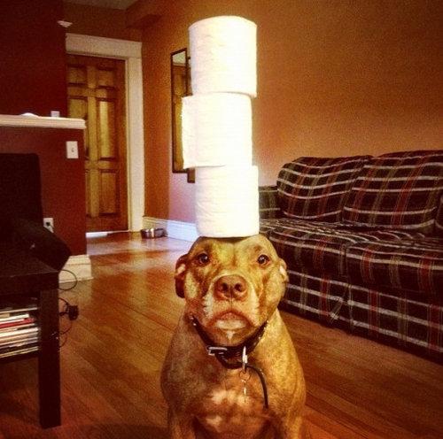 頭に載せる犬09