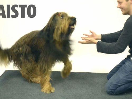 犬の目の前で、エサが消える手品01