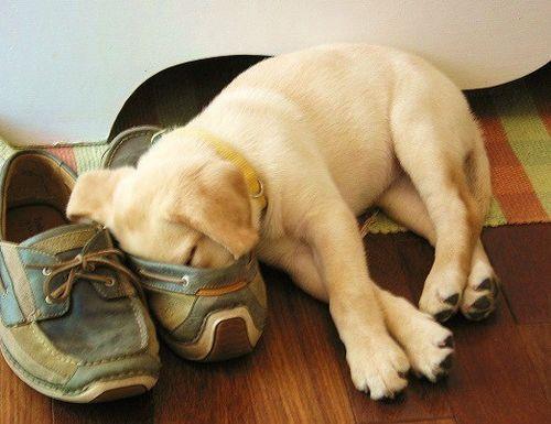靴の中の犬06