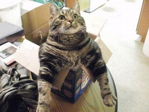 なぜ猫はえらいのか01