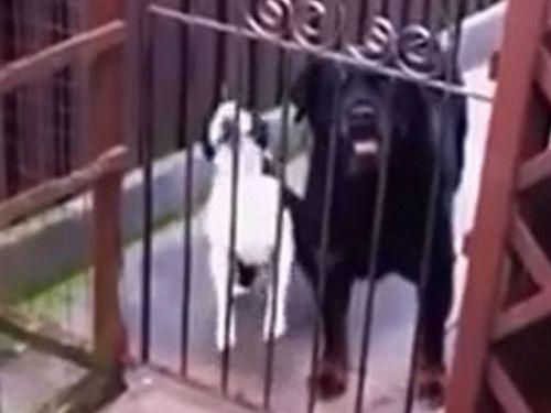 「ハロー」と鳴く犬01