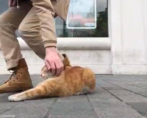 イスタンブールの猫04