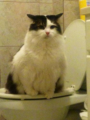 猫とトイレ01