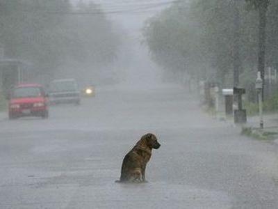 「この犬いらない…」捨てた飼い主のひどい言い訳