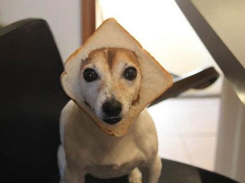 犬とパンの耳07