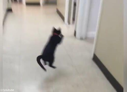 ピンポン猫04