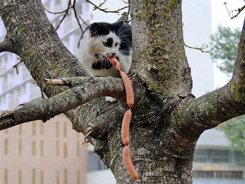 泥棒猫06