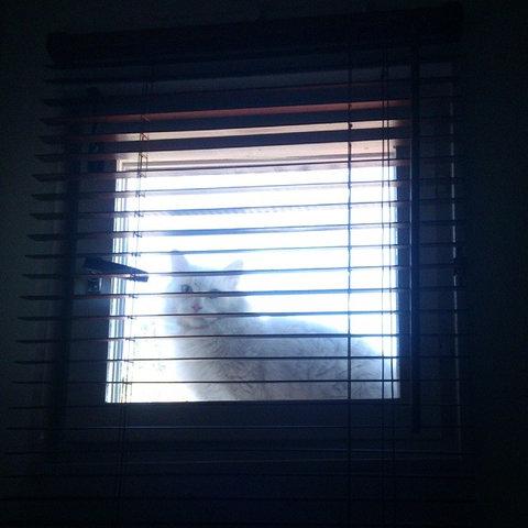 近所の猫の不満04