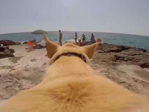海が好きな犬01
