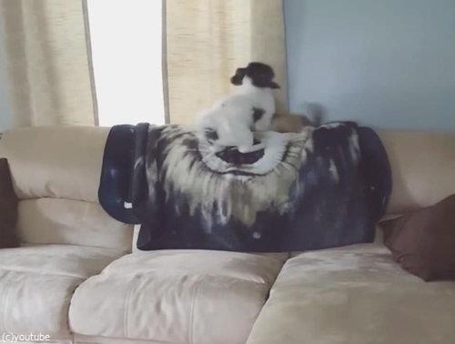 ソファの上の犬が消える05