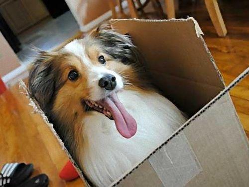 箱好きの犬00