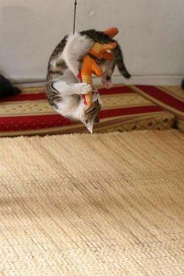 猫攻撃04