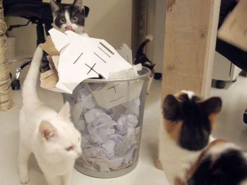職場が猫だらけだったら05