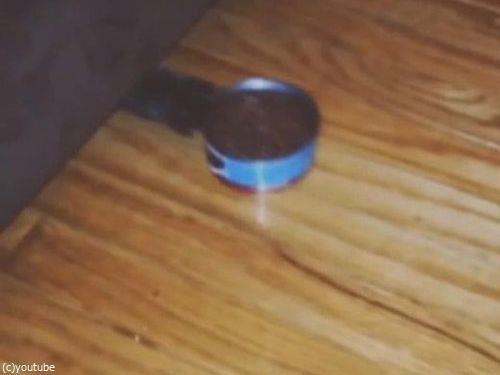 猫の独特な食べ方06