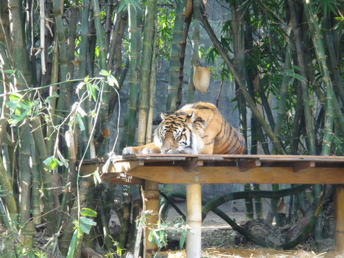 動物園に行ったらみんな寝ていた08