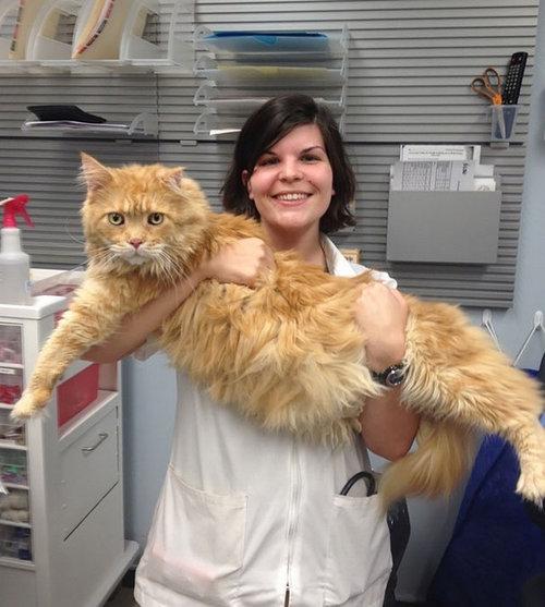 大きな猫メインクーン06