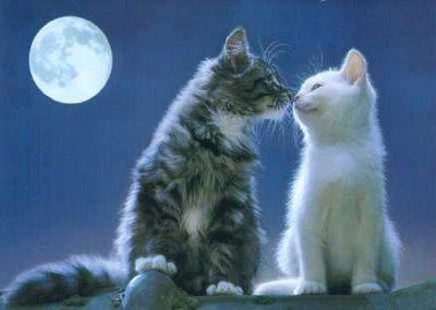 愛し合い猫11