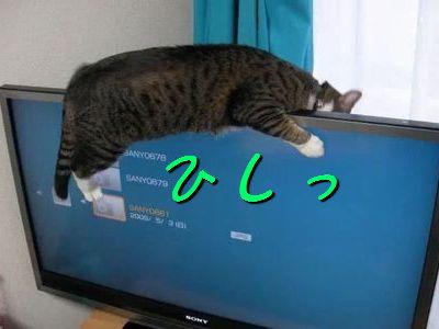 薄型テレビにしがみつく猫_s