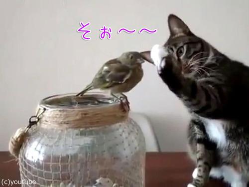 鳥を優しくさわる猫00