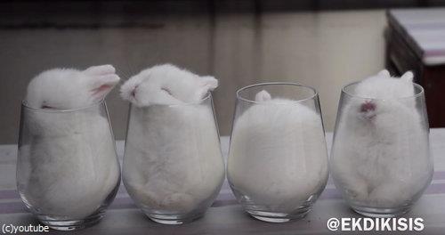 ガラスのコップとウサギ4匹04