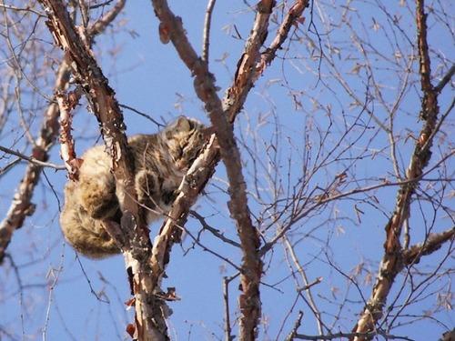 鳥のように木に止まる猫たち00