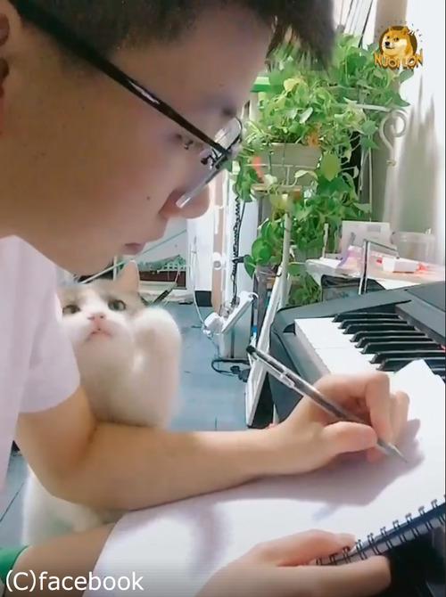 この猫は絶対自分の可愛さを知ってる02