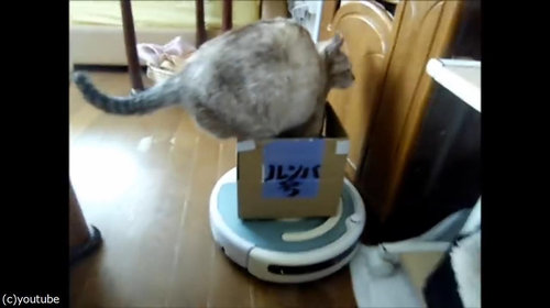ルンバを乗りこなす猫06