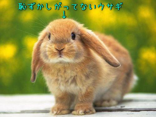 恥ずかしがるウサギ00