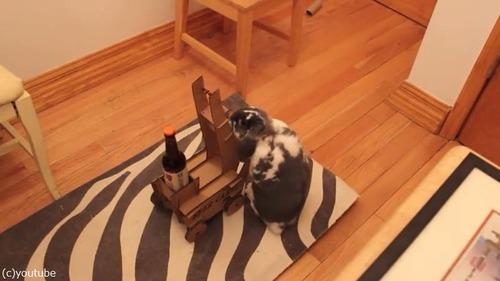 ビールを持ってきてくれるウサギ03