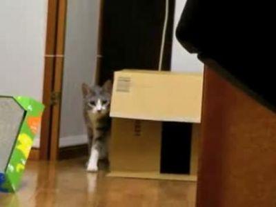 だるまさんがころんだをする猫