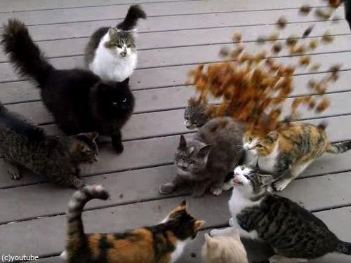 猫の大合唱05