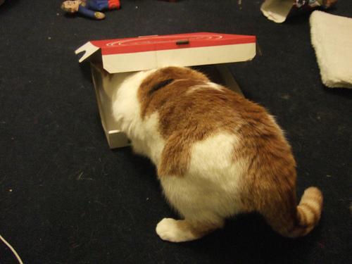 ピザ猫00