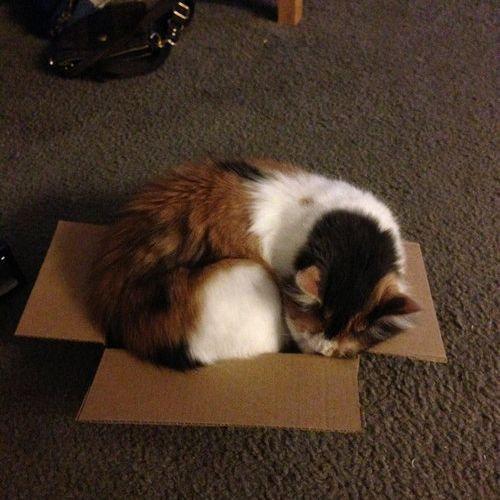 箱入り猫05
