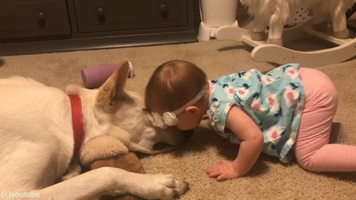 犬、赤ちゃんにキスのお返し01